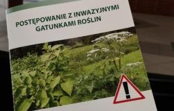 Jak postępować z gatunkami inwazyjnymi roślin na Hluczyńsku i w polskich gminach