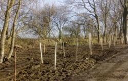 Akcja sadzenia drzew na terenie Gminy Pietrowice Wielkie